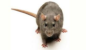 slider_roedores